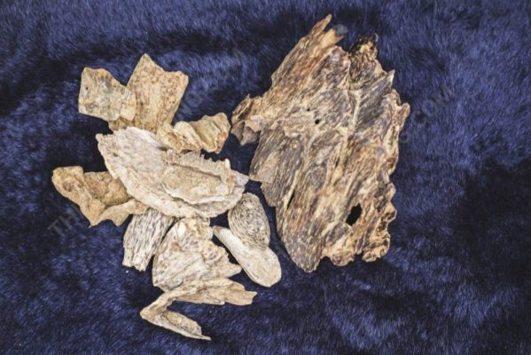 type of Toc agarwood