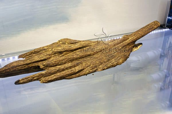 The typical agarwood consists of many types