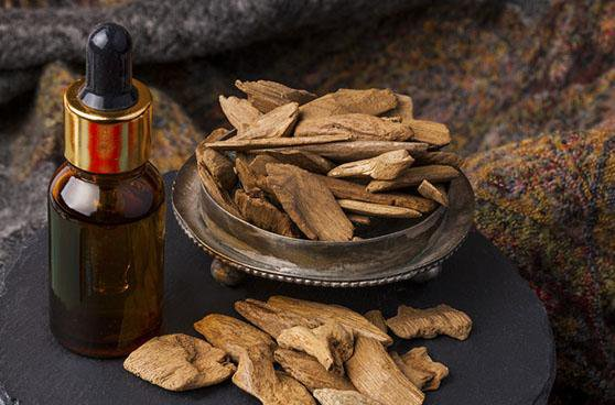 Ant agarwood is created by numerous ants drilling in the aquilaria tree